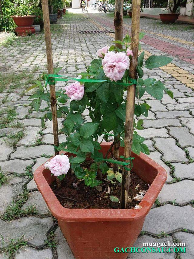 Mua gạch lát sân, gạch lót sân vườn, nơi bán gạch con sâu uy tín chất lượng tốt nhất, giá rẻ